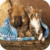 猫游戏的孩子+可爱的小狗的狗游戏 1