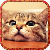 暴走在情人節貓 - 可愛的小貓遊戲 1