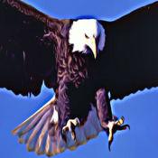 """白头鹰"""" - 鸟铃声和声音效果,警报 2"""