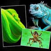 蛇 蜘蛛 蜥蜴 短吻鳄 - 壁纸 动物 + 爬行动物 1