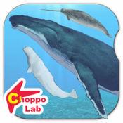 世界鲸与海豚图鉴 ~简单图鉴放置游戏系列~ 1.4.0