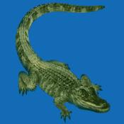Gator的声音 7.1.1