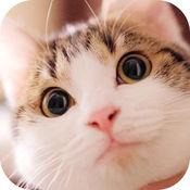 逗猫必备神器-宠物交流模拟器 1.1