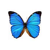 跳舞的蝴蝶 - Dancing Butterfly