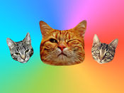 对于猫的iMessag...