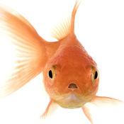 会说话的金鱼 6.32