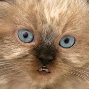 会说话的小猫咪 6.32