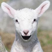 会说话的羊羔 6.32