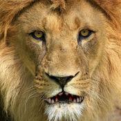 会说话的狮子 6.32