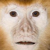 会说话的猴子 6.32