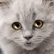 悲伤的猫 6.32