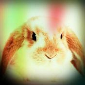 兔 - 兔子的声音...