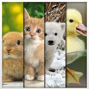 可爱的动物 高清壁纸 - 养宠物 : 免费的背景 1
