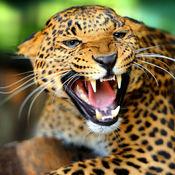 动物的声音:140+惊人的图像和动物的声音 1