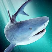 海洋 鲨鱼 危险 水族箱 世界 冒险 游戏 - 海底捞 发烧友