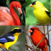 世界的鸟 - 地球的着名鸟测验