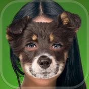 可爱的小狗的脸换 – 动物头照片编辑器与滑稽的狗和猫贴纸