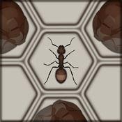 赶上蚂蚁 / Catch The Ant
