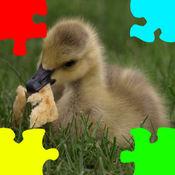 小鸭小鹅拼图