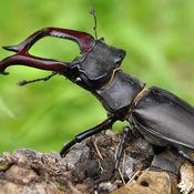 世界上的昆虫...