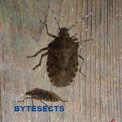 Bytesects   真正的美眉昆虫蚂蚁蜘蛛游戏和屏幕保护程序