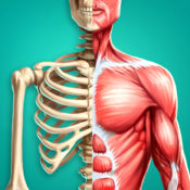 发现人体---解剖学基础