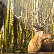 鹿狩猎通话 -最好的鹿狩猎通话这每一个鹿的猎人必须用 1