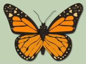 蝴蝶和蜻蜓