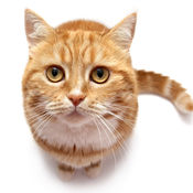 猫声音:猫爱好者,孩子和成人趣味声音 1.2