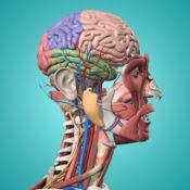 解剖学 & 生理 - 解剖学 的 人类 身体 部分 1