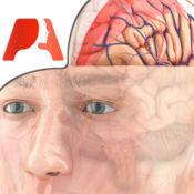 Pocket Brain - 交互式神经解剖学