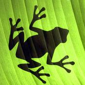 青蛙跳跳智力 1.0.02