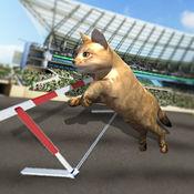 猫赛车免费游戏