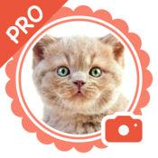 宠物相机 Pro - 给你的宠物加上可爱表情和激萌贴纸