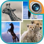 野生动物帧照片编辑器:假日图片拼贴 1