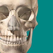 骨骼解剖学图谱