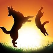 猫和狗twerk:动物...