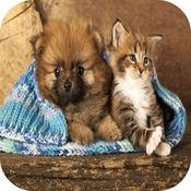 猫游戏的孩子+可爱的小狗的狗游戏