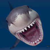 鲨 屠杀 - 水手 潜水员 袭击