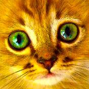 幼儿拼图女孩 – 貓,小 猫, 猫