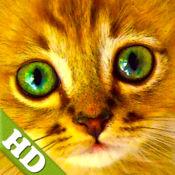 幼儿拼图女孩 – 貓,小 猫, 猫 HD