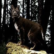 山猫 - 声音,铃声,警报从山顶