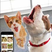 猫喵:有趣的方式来恶作剧和巨魔你的宠物 1