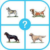 狗品种测验:猜猜狗琐事小游戏