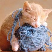 小猫咪滚毛线球...