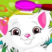 猫咪毛发护理