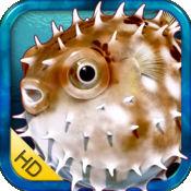 海洋生物 HD -by Rye Studio™