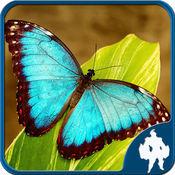 蝴蝶拼图 1.6.0