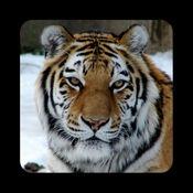 大型猫科动物
