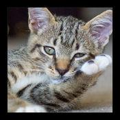 通过不同品种的小猫 1